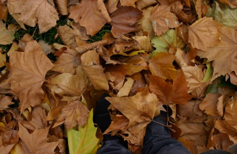 feet-in-leaves